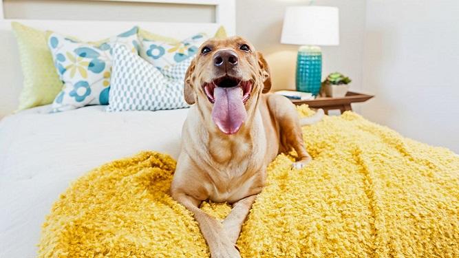 Tips para mascotas en apartamentos