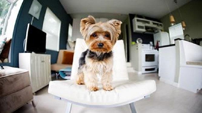 ¿Con qué mascota debés empezar si vivís en un apartamento?